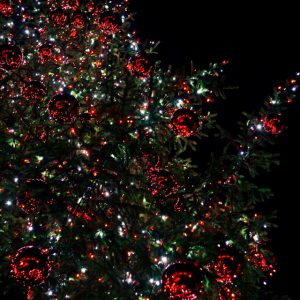 Xmas tree (Covent Garden)