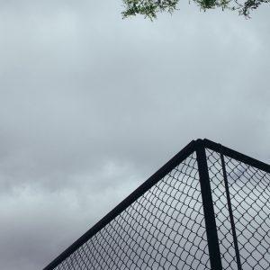 The wild cage