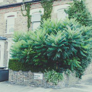 Jungle in a corner II