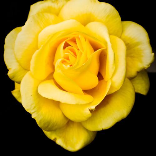 Alfredo Ezquerra Photographer flowers portfolio