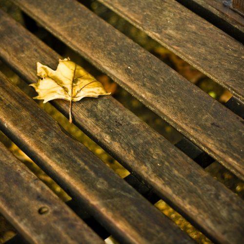 Autumn (_MG_8894)